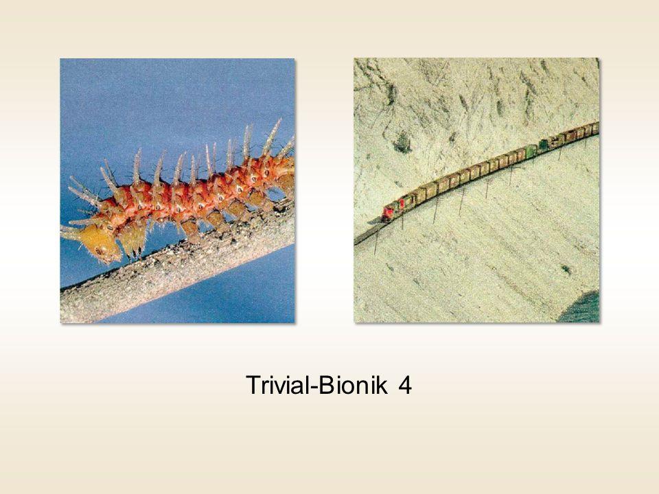 Trivial-Bionik 4