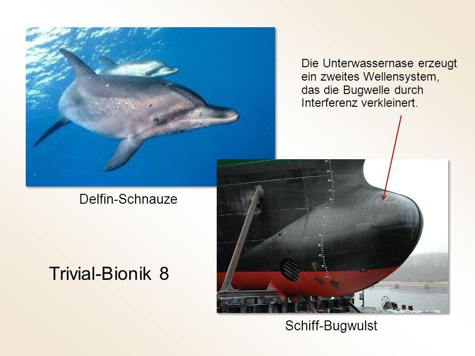 Trivial-Bionik 8 Schiff-Bugwulst Delfin-Schnauze Die Unterwassernase erzeugt ein zweites Wellensystem, das die Bugwelle durch Interferenz verkleinert.