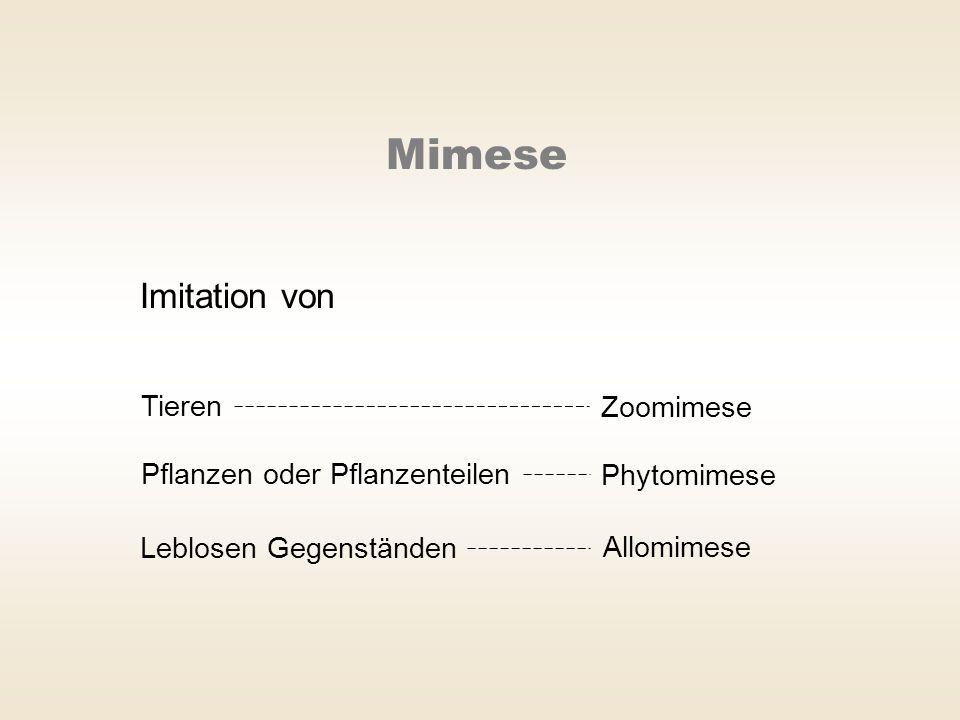 Imitation von Tieren Zoomimese Pflanzen oder Pflanzenteilen Phytomimese Leblosen Gegenständen Allomimese Mimese