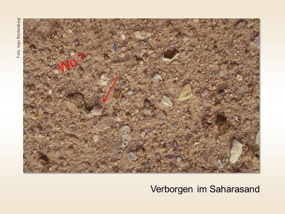 Verborgen im Saharasand Foto: Ingo Rechenberg Wo ?