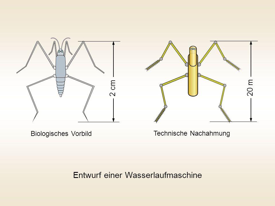 2 cm 20 m Biologisches Vorbild Technische Nachahmung Entwurf einer Wasserlaufmaschine