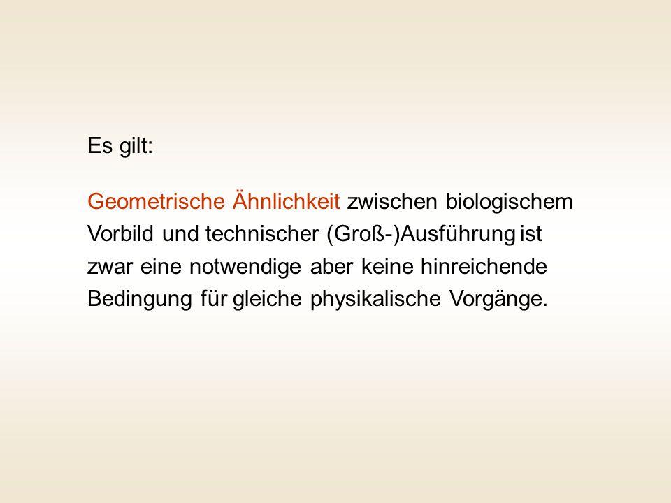 Vogel Weißstorch Re = 1 ·10 5