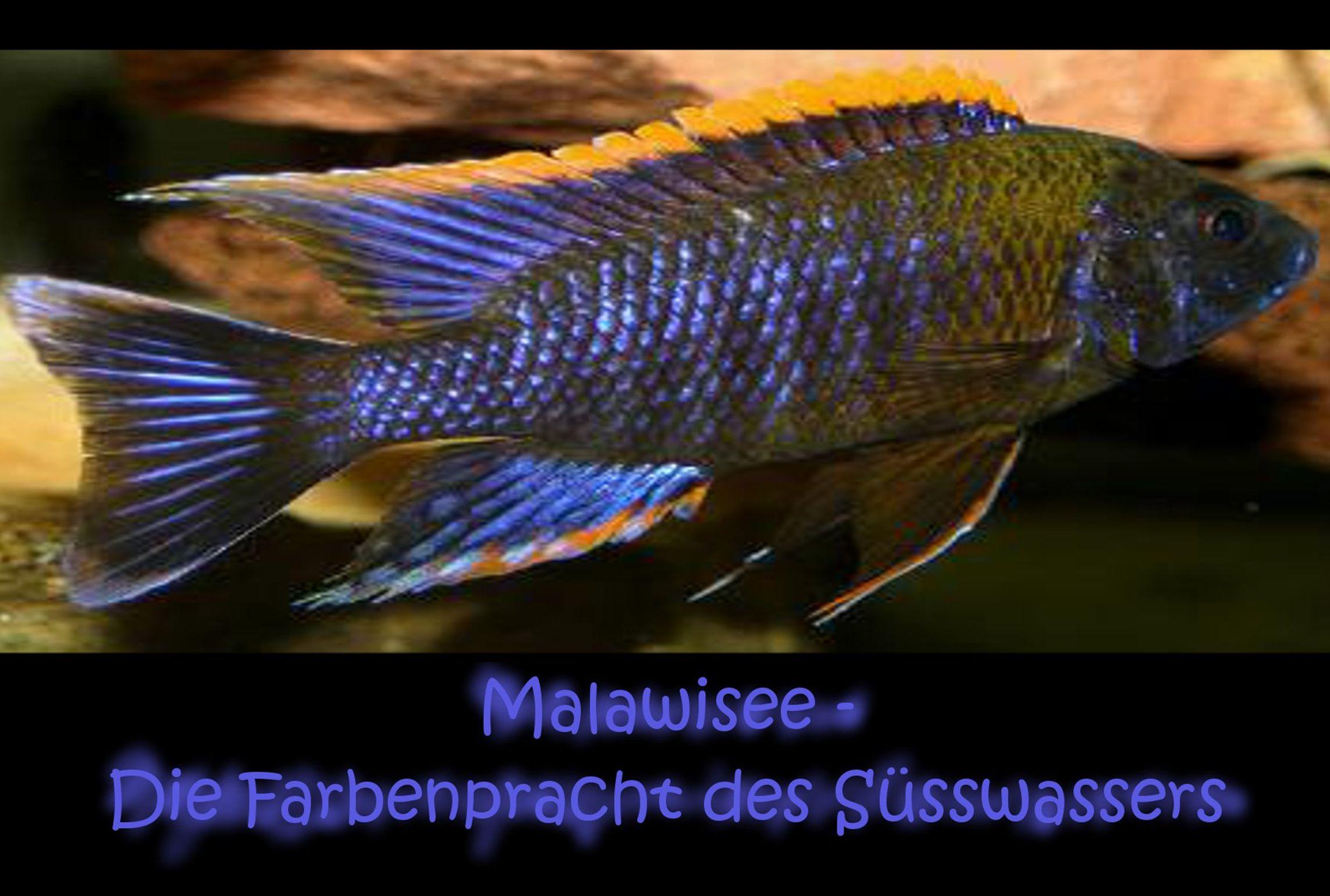 Der Malawisee ist mit einer Fläche von 28480 der 11 größte See der Erde.