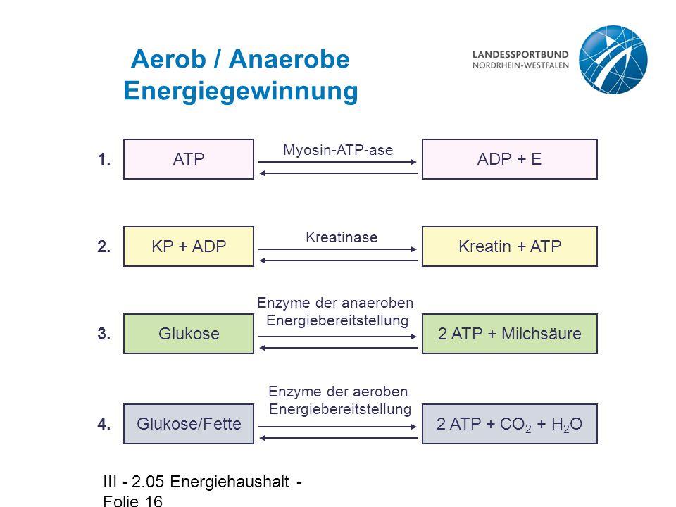 III - 2.05 Energiehaushalt - Folie 16 Aerob / Anaerobe Energiegewinnung ADP + E Kreatin + ATP 2 ATP + Milchsäure ATP KP + ADP Glukose Glukose/Fette Myosin-ATP-ase Kreatinase Enzyme der anaeroben Energiebereitstellung Enzyme der aeroben Energiebereitstellung 1.