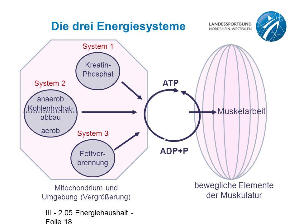 III - 2.05 Energiehaushalt - Folie 18 Die drei Energiesysteme Mitochondrium und Umgebung (Vergrößerung) Fettver- brennung System 3 System 2 Kohlenhydrat- abbau aerob anaerob System 1 Kreatin- Phosphat bewegliche Elemente der Muskulatur Muskelarbeit ADP+P ATP