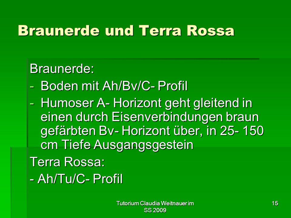 Tutorium Claudia Weitnauer im SS 2009 15 Braunerde und Terra Rossa Braunerde: -Boden mit Ah/Bv/C- Profil -Humoser A- Horizont geht gleitend in einen d