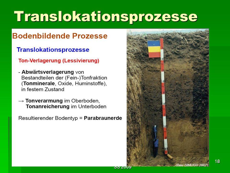 Tutorium Claudia Weitnauer im SS 2009 18 Translokationsprozesse