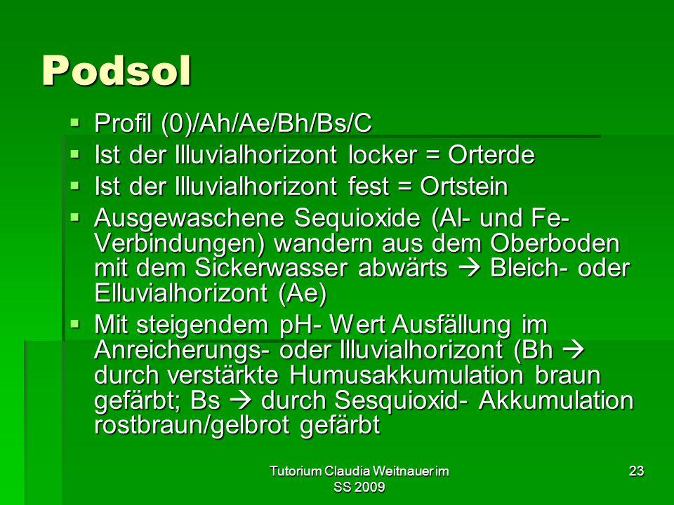 Tutorium Claudia Weitnauer im SS 2009 23 Podsol  Profil (0)/Ah/Ae/Bh/Bs/C  Ist der Illuvialhorizont locker = Orterde  Ist der Illuvialhorizont fest