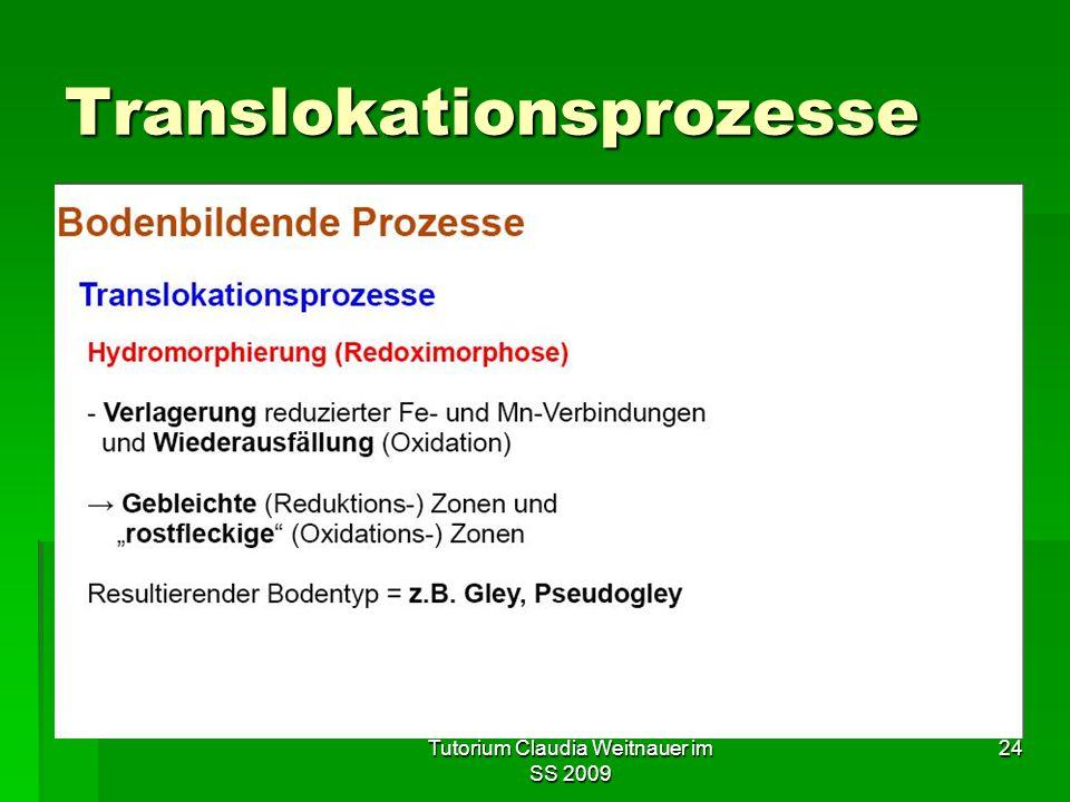 Tutorium Claudia Weitnauer im SS 2009 24 Translokationsprozesse