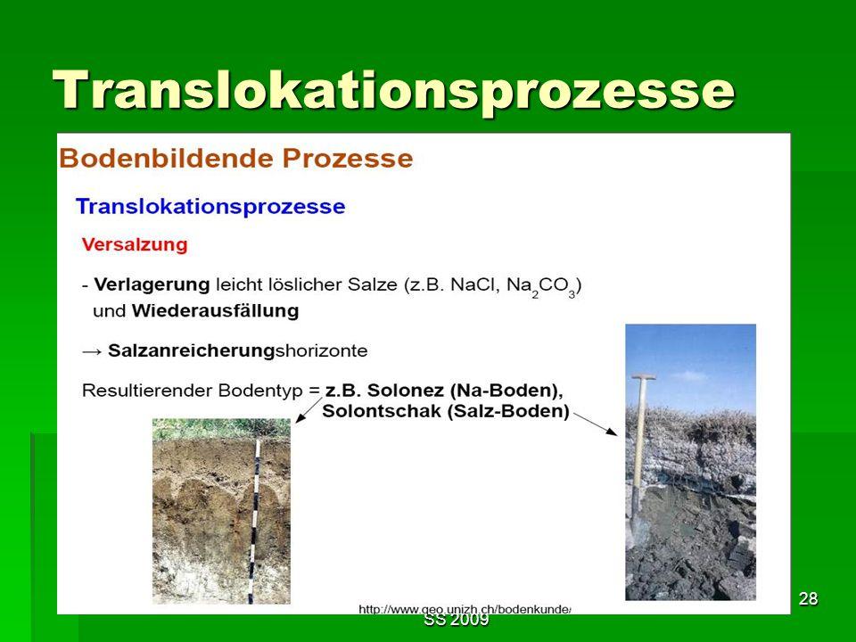 Tutorium Claudia Weitnauer im SS 2009 28 Translokationsprozesse