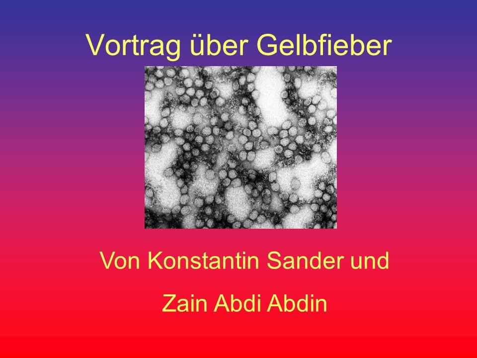 Vortrag über Gelbfieber Von Konstantin Sander und Zain Abdi Abdin