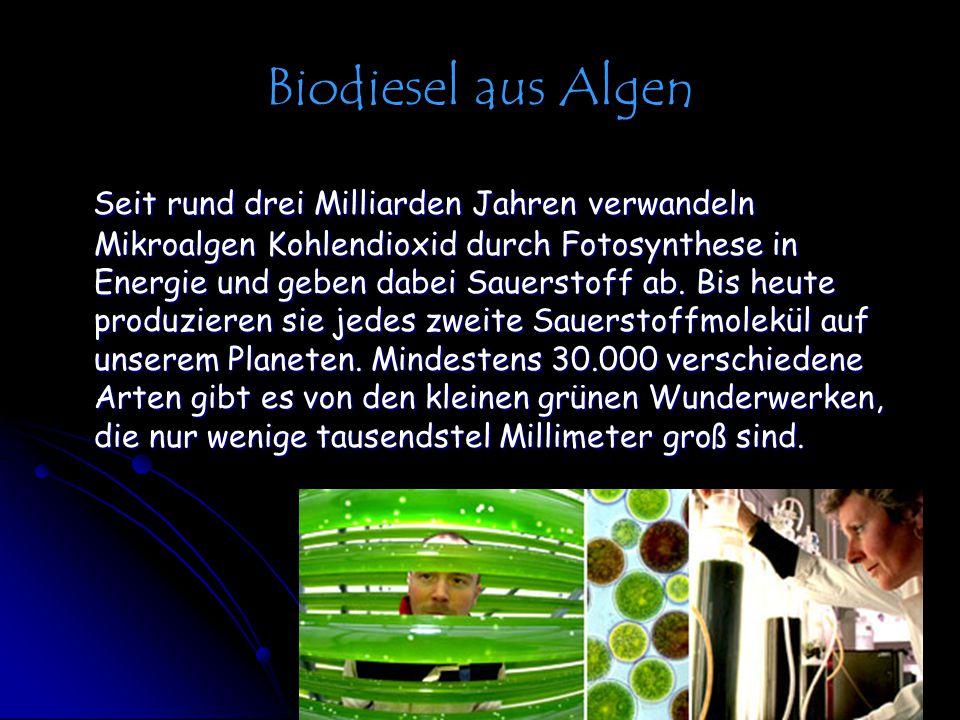 Biodiesel aus Algen Seit rund drei Milliarden Jahren verwandeln Mikroalgen Kohlendioxid durch Fotosynthese in Energie und geben dabei Sauerstoff ab. B