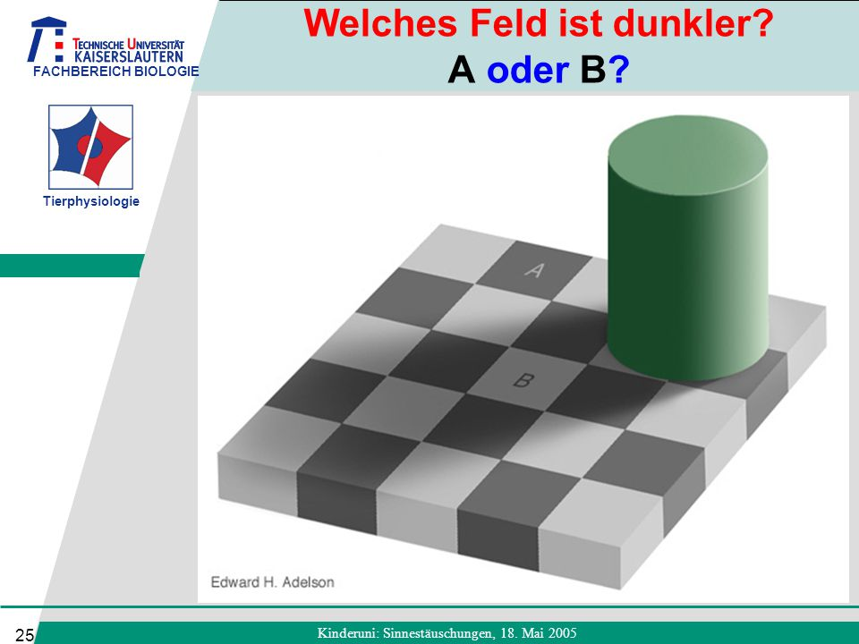 FACHBEREICH BIOLOGIE Tierphysiologie Kinderuni: Sinnestäuschungen, 18. Mai 2005 25 Welches Feld ist dunkler? A oder B?