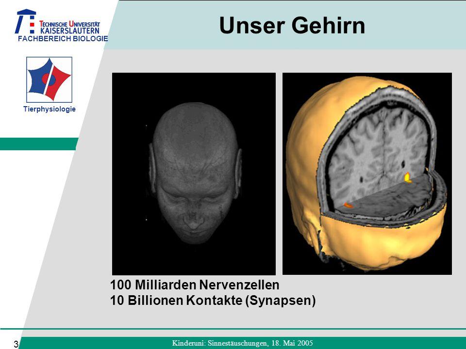 FACHBEREICH BIOLOGIE Tierphysiologie Kinderuni: Sinnestäuschungen, 18. Mai 2005 3 Unser Gehirn 100 Milliarden Nervenzellen 10 Billionen Kontakte (Syna