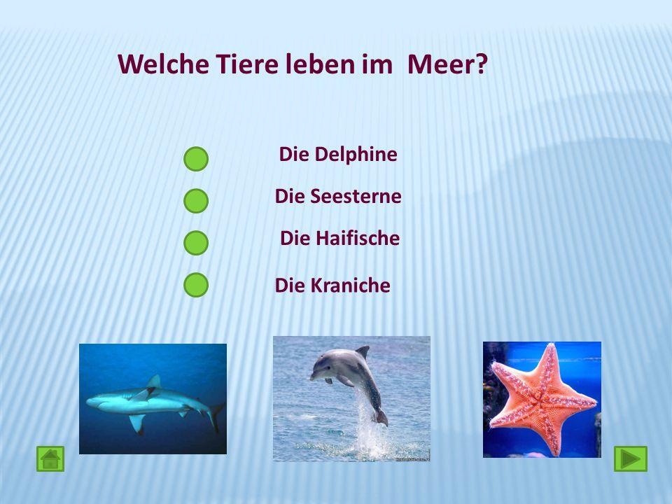 Die Haifische Die Kraniche Welche Tiere leben im Meer? Die Seesterne Die Delphine