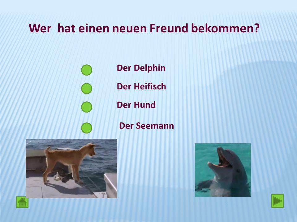 Der Delphin Der Heifisch Der Hund Der Seemann Wer hat einen neuen Freund bekommen?