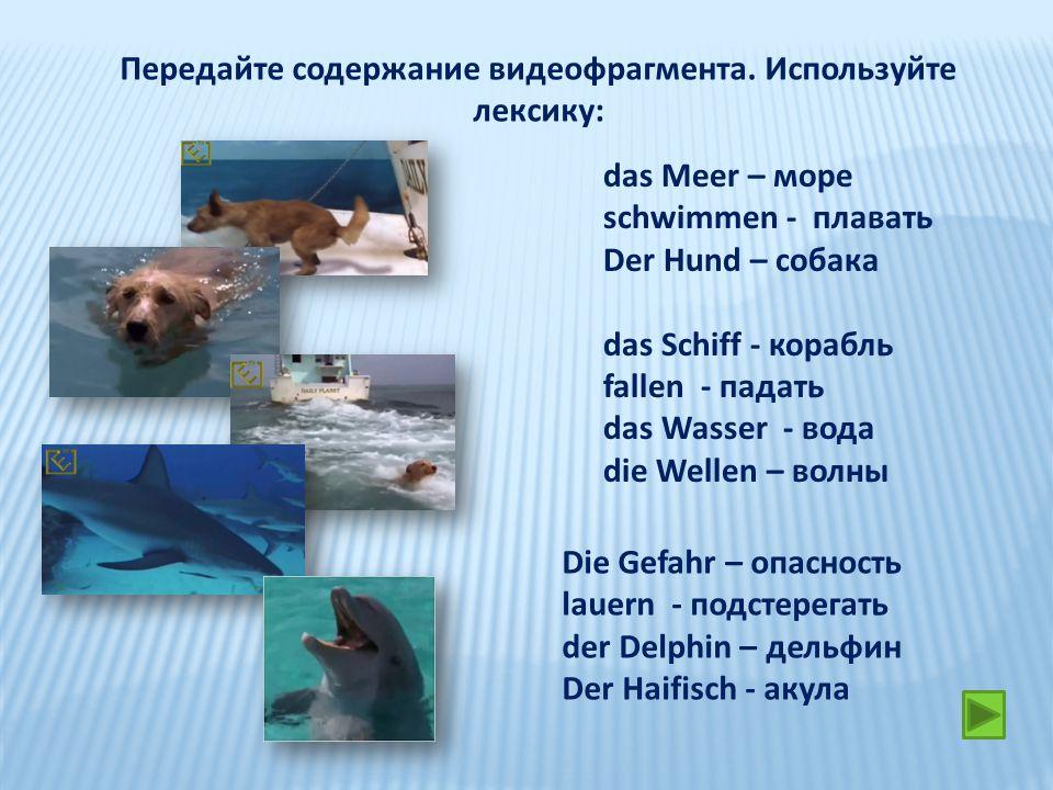 Передайте содержание видеофрагмента. Используйте лексику: das Meer – море schwimmen - плавать Der Hund – собака das Schiff - корабль fallen - падать d