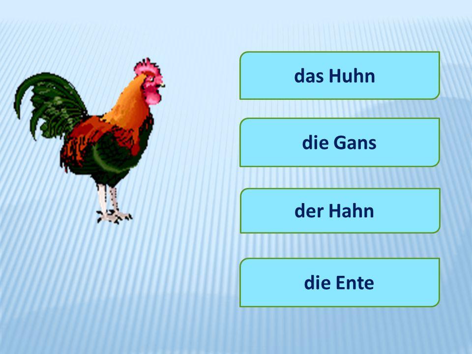 das Huhn die Gans der Hahn die Ente