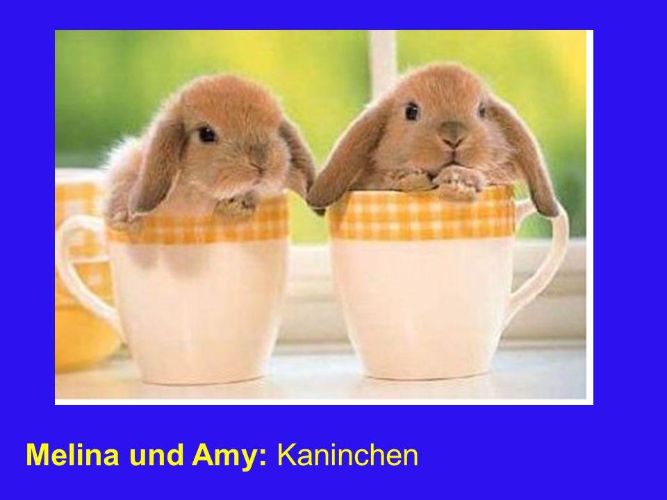 Melina und Amy: Kaninchen