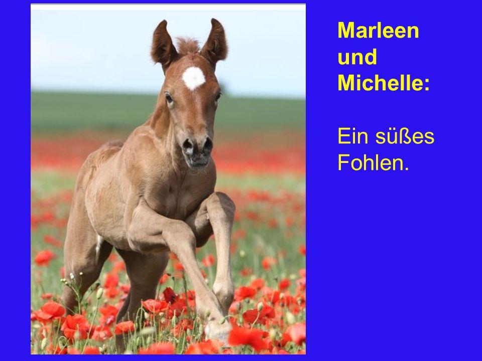 Marleen und Michelle: Ein süßes Fohlen.