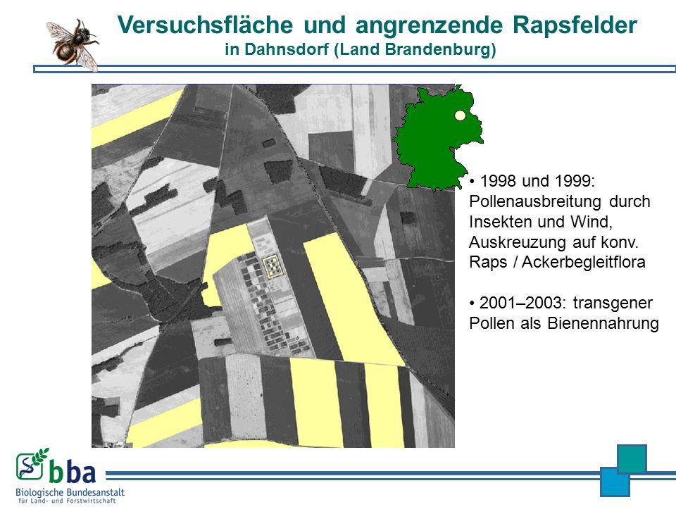 500 m 1998 und 1999: Pollenausbreitung durch Insekten und Wind, Auskreuzung auf konv. Raps / Ackerbegleitflora 2001–2003: transgener Pollen als Bienen