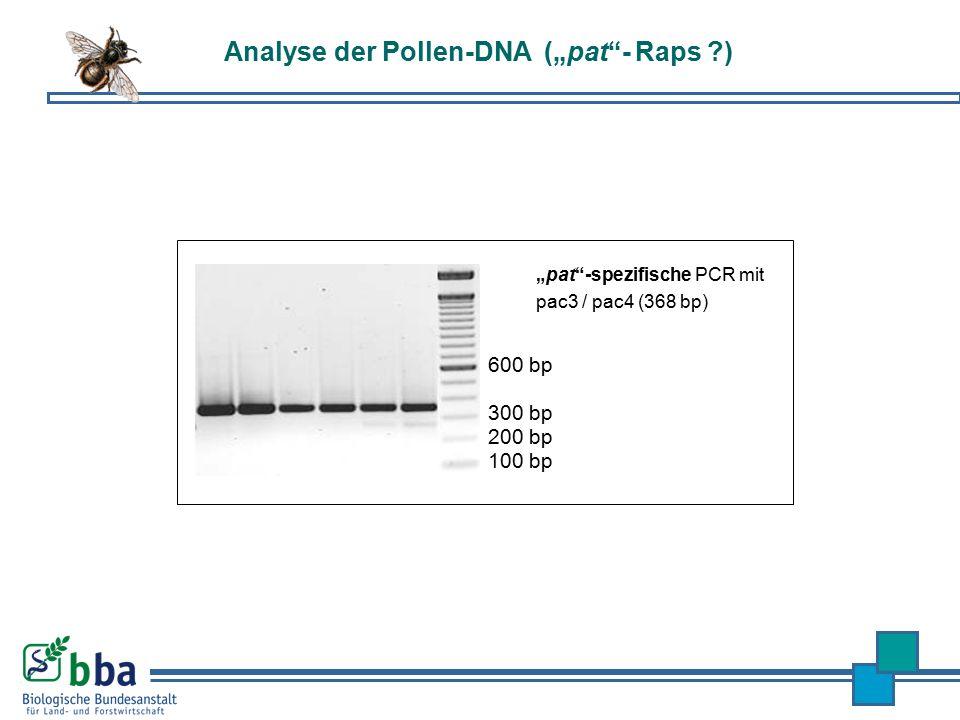 """""""pat""""-spezifische PCR mit pac3 / pac4 (368 bp) 100 bp 200 bp 300 bp 600 bp Analyse der Pollen-DNA (""""pat""""- Raps ?)"""