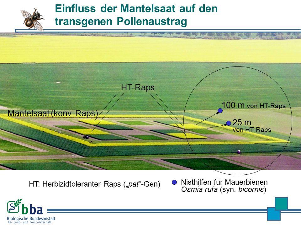 Nisthilfen für Mauerbienen Osmia rufa (syn. bicornis) 25 m von HT-Raps 100 m von HT-Raps Mantelsaat (konv. Raps) HT-Raps Einfluss der Mantelsaat auf d