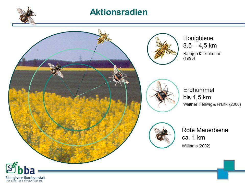 Aktionsradien Honigbiene 3,5 – 4,5 km Rathjen & Edelmann (1995) Rote Mauerbiene ca. 1 km Williams (2002) Erdhummel bis 1,5 km Walther-Hellwig & Frankl