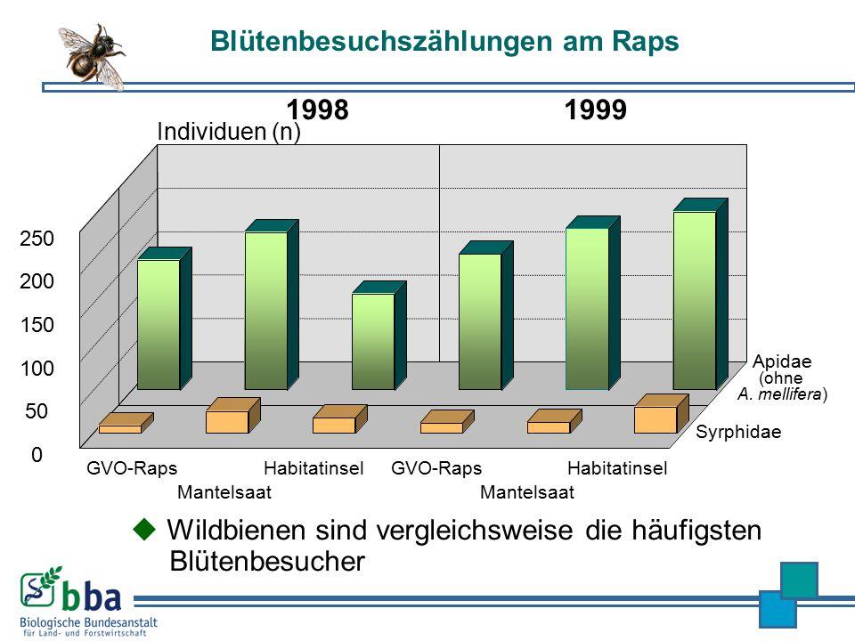 Blütenbesuchszählungen am Raps Mantelsaat HabitatinselGVO-Raps Mantelsaat HabitatinselGVO-Raps Syrphidae 19981999 0 50 100 150 200 250 Individuen (n)