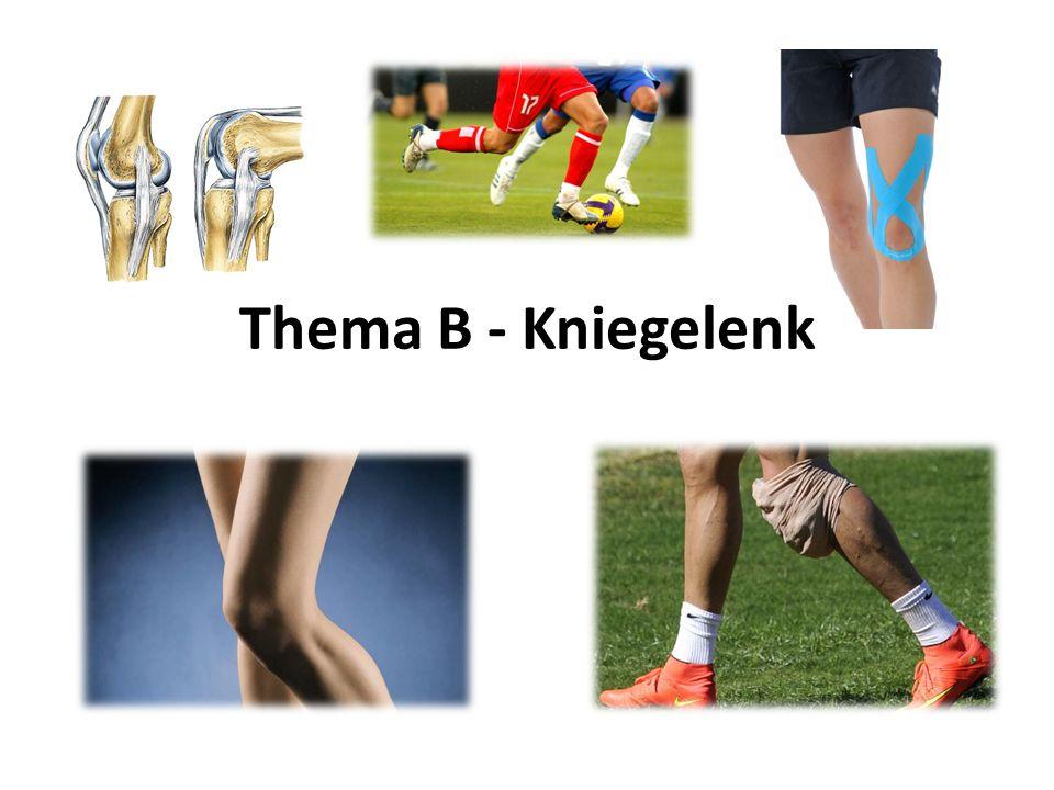 Aufgaben: Beschreibt den Aufbau des Kniegelenks.