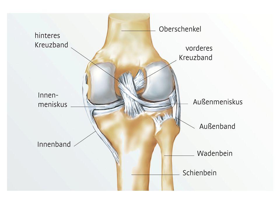 Schaut auch das Lehrvideo über das Knie an.