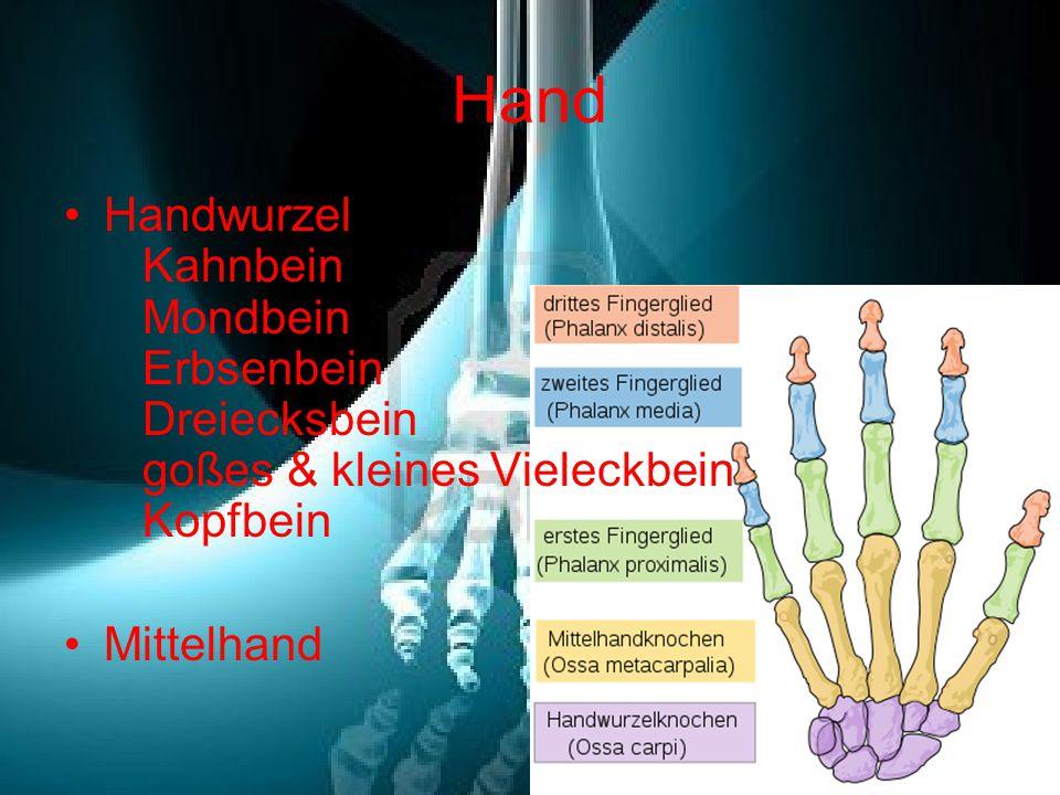 Hand Handwurzel Kahnbein Mondbein Erbsenbein Dreiecksbein goßes & kleines Vieleckbein Kopfbein Mittelhand