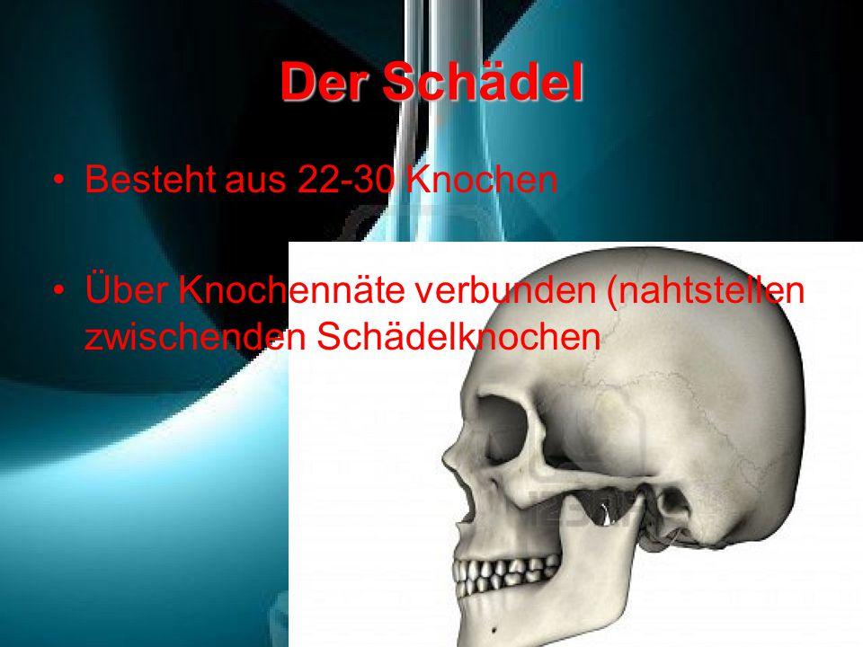 Der Schädel Besteht aus 22-30 Knochen Über Knochennäte verbunden (nahtstellen zwischenden Schädelknochen