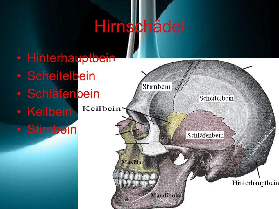 Hirnschädel Hinterhauptbein Scheitelbein Schläfenbein Keilbein Stirnbein