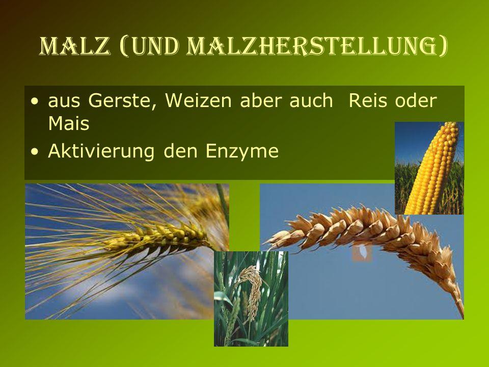 MALZ (und Malzherstellung) aus Gerste, Weizen aber auch Reis oder Mais Aktivierung den Enzyme