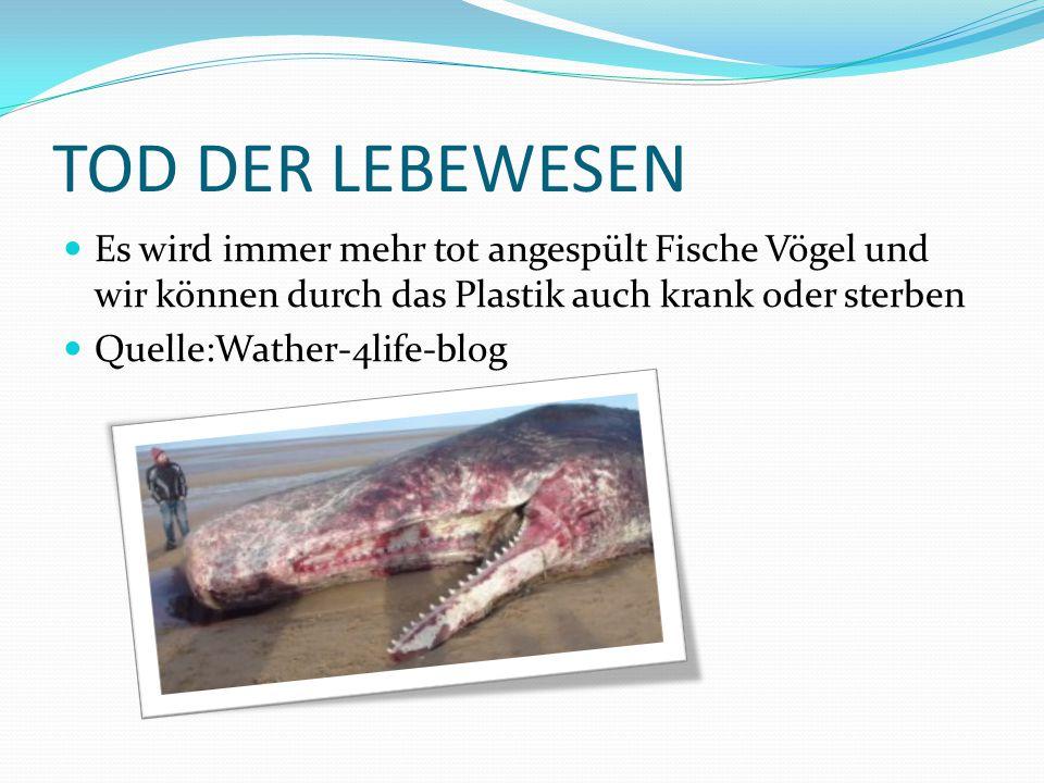 TOD DER LEBEWESEN Es wird immer mehr tot angespült Fische Vögel und wir können durch das Plastik auch krank oder sterben Quelle:Wather-4life-blog