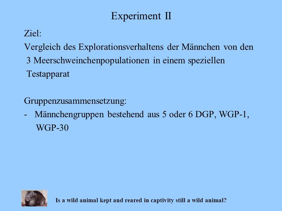 Ziel: Vergleich des Explorationsverhaltens der Männchen von den 3 Meerschweinchenpopulationen in einem speziellen Testapparat Gruppenzusammensetzung: