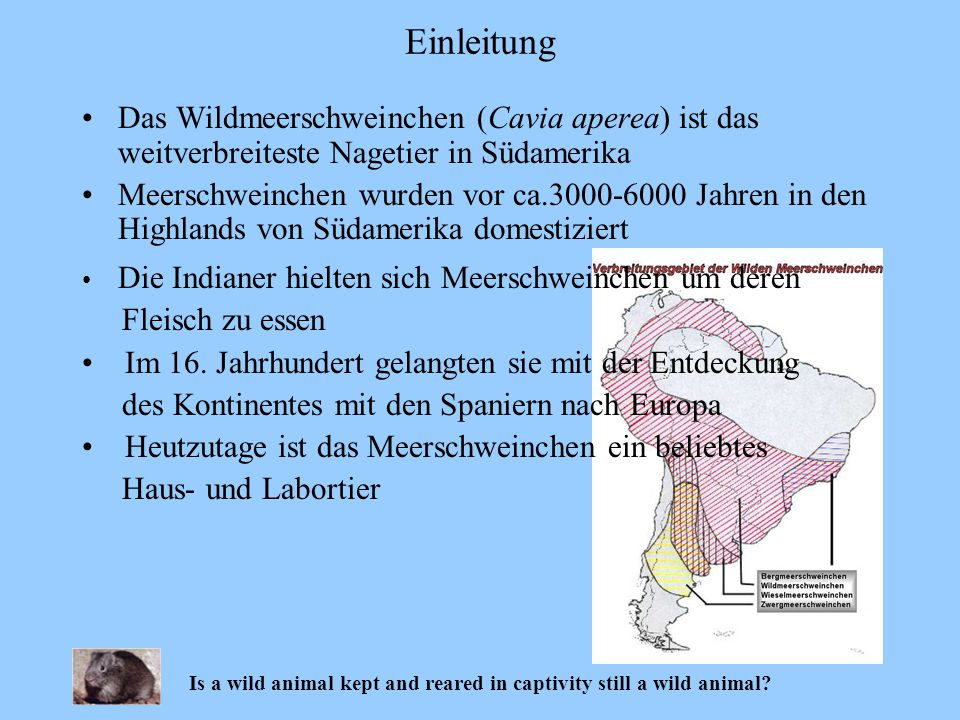 Is a wild animal kept and reared in captivity still a wild animal? Ergebnisse Experiment II