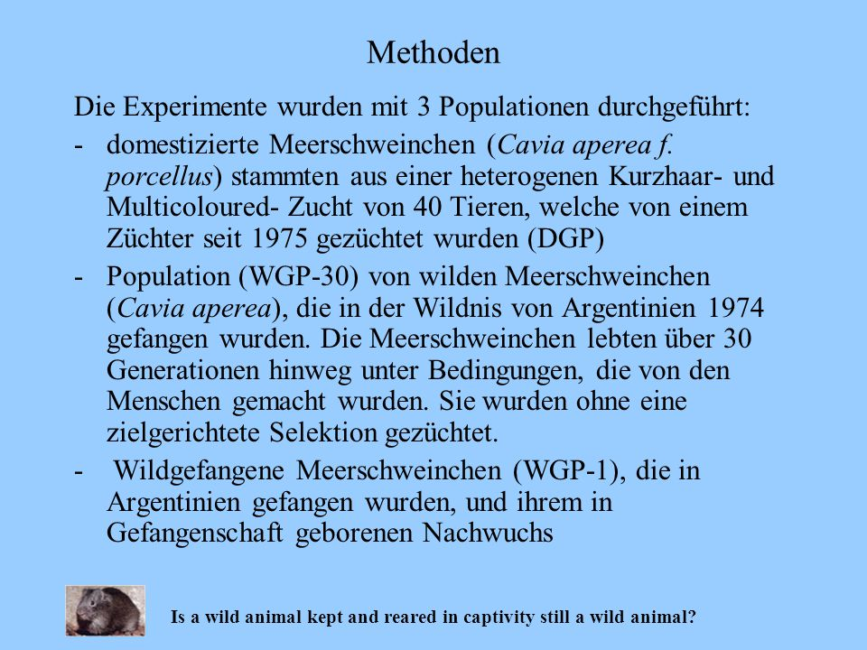 Methoden Is a wild animal kept and reared in captivity still a wild animal? Die Experimente wurden mit 3 Populationen durchgeführt: -domestizierte Mee