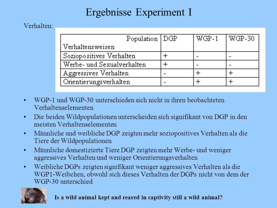 Ergebnisse Experiment I Verhalten: WGP-1 und WGP-30 unterschieden sich nicht in ihren beobachteten Verhaltenselementen Die beiden Wildpopulationen unt