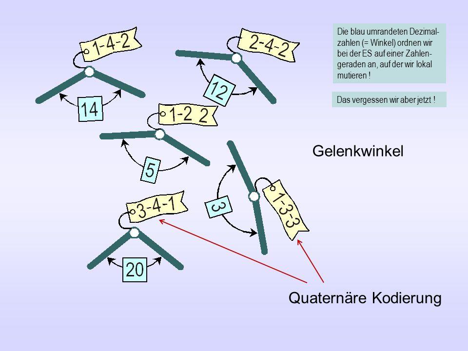 Quaternäre Kodierung Gelenkwinkel Die blau umrandeten Dezimal- zahlen (= Winkel) ordnen wir bei der ES auf einer Zahlen- geraden an, auf der wir lokal mutieren .