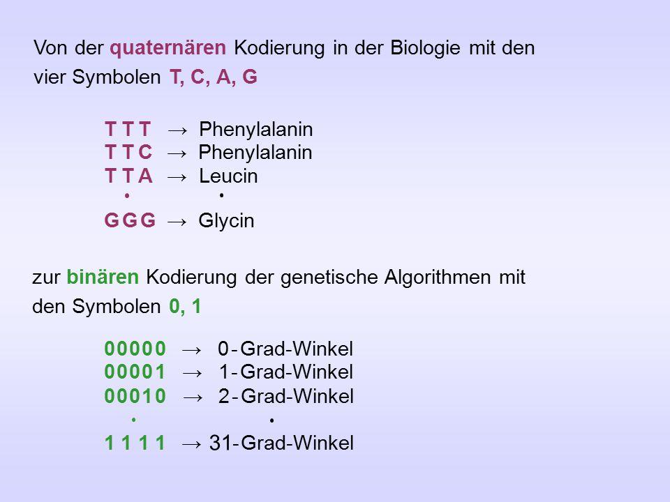 Von der quaternären Kodierung in der Biologie mit den vier Symbolen T, C, A, G T T T → Phenylalanin T T C → Phenylalanin T T A → Leucin G G G → Glycin zur binären Kodierung der genetische Algorithmen mit den Symbolen 0, 1 0 0 0 0 0 → 0 - Grad-Winkel 0 0 0 0 1 → 1 - Grad-Winkel 0 0 0 1 0 → 2 - Grad-Winkel 1 1 1 1 → 31 - Grad-Winkel