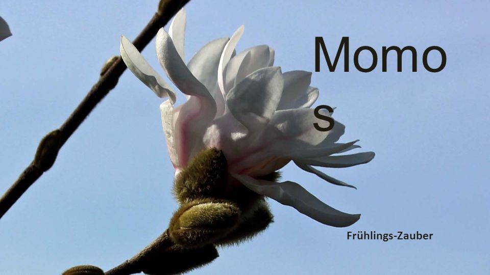 Einen erfolgreichen und schönen Frühling wünscht Momo Gestaltung, Fotos + Text schmutz-lingg@bluewin.ch
