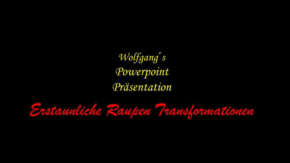 Wolfgang´s Powerpoint Präsentation Erstaunliche Raupen Transformationen