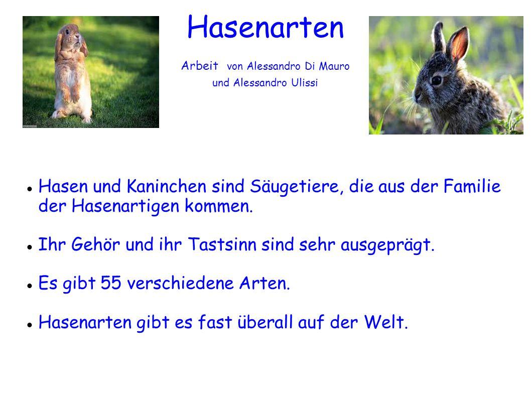 Hasenarten Arbeit von Alessandro Di Mauro und Alessandro Ulissi Hasen und Kaninchen sind Säugetiere, die aus der Familie der Hasenartigen kommen. Ihr