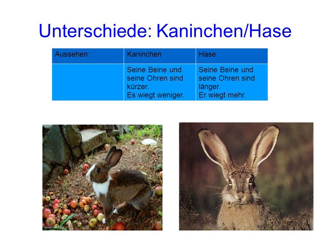 Unterschiede: Kaninchen/Hase Aussehen:KaninchenHase Seine Beine und seine Ohren sind kürzer. Es wiegt weniger. Seine Beine und seine Ohren sind länger