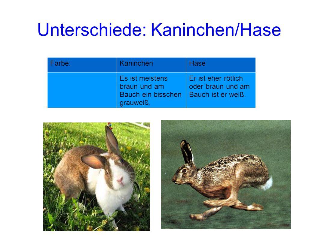 Farbe:KaninchenHase Es ist meistens braun und am Bauch ein bisschen grauweiß. Er ist eher rötlich oder braun und am Bauch ist er weiß. Unterschiede: K