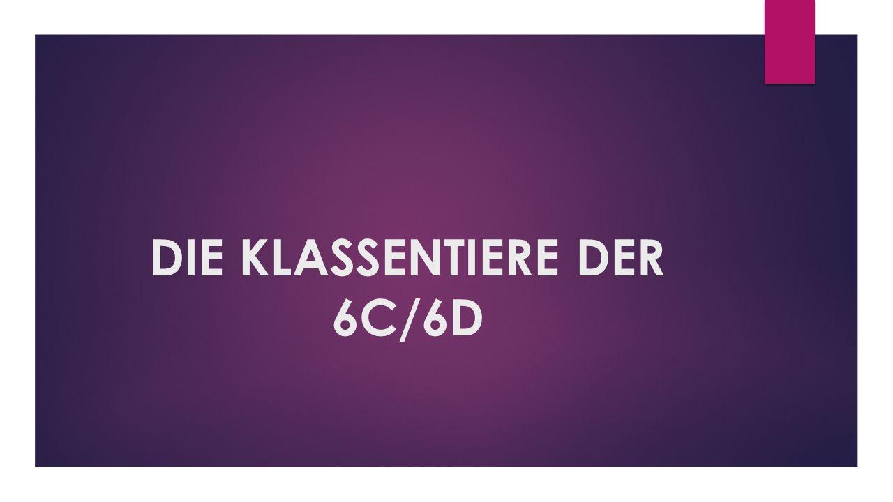DIE KLASSENTIERE DER 6C/6D
