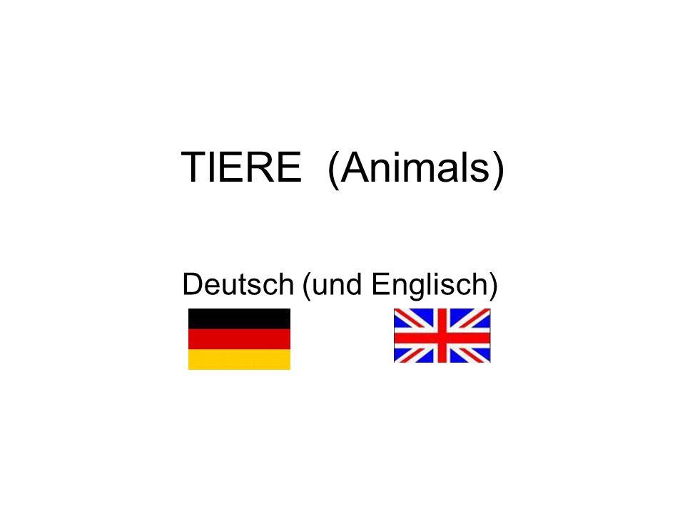 TIERE (Animals) Deutsch (und Englisch)