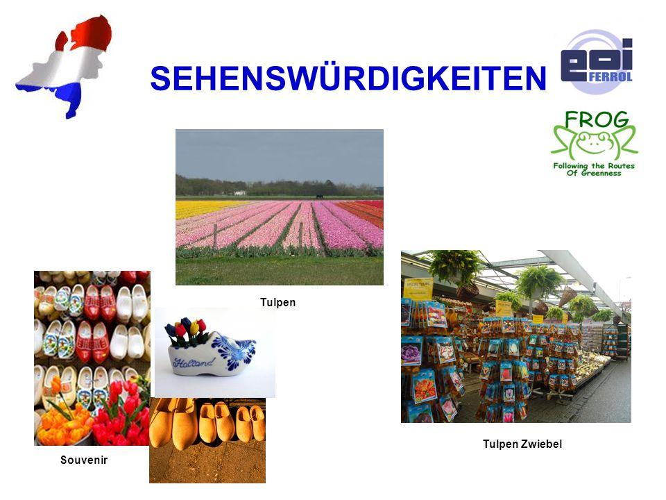 SEHENSWÜRDIGKEITEN Souvenir Tulpen Zwiebel Tulpen